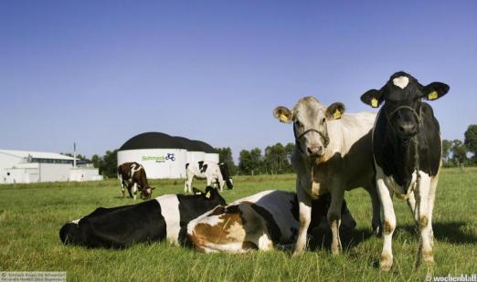 Биогаз - оптимальный источник альтернативной энергии для Украины!